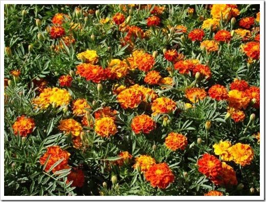 Неприхотливые растения: мечта каждого дачника