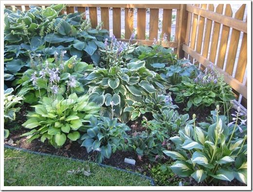 Почему осенью сажать многолетние растения предпочтительно?