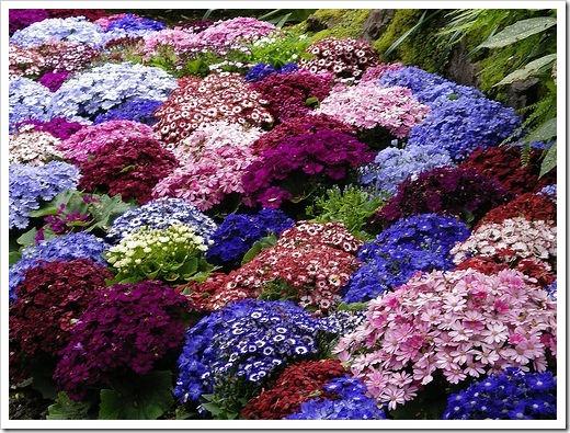 Какие цветы можно высаживать в сентябре и октябре