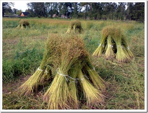 Производство и использование льна