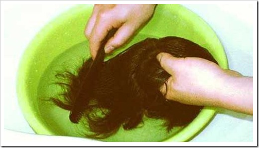 Создание причёски на парике