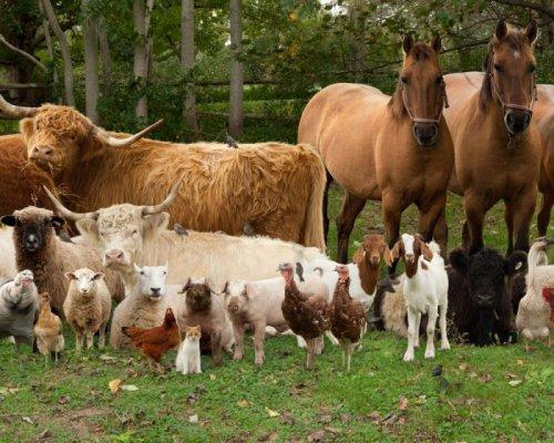 Каких животных выращивают на ферме